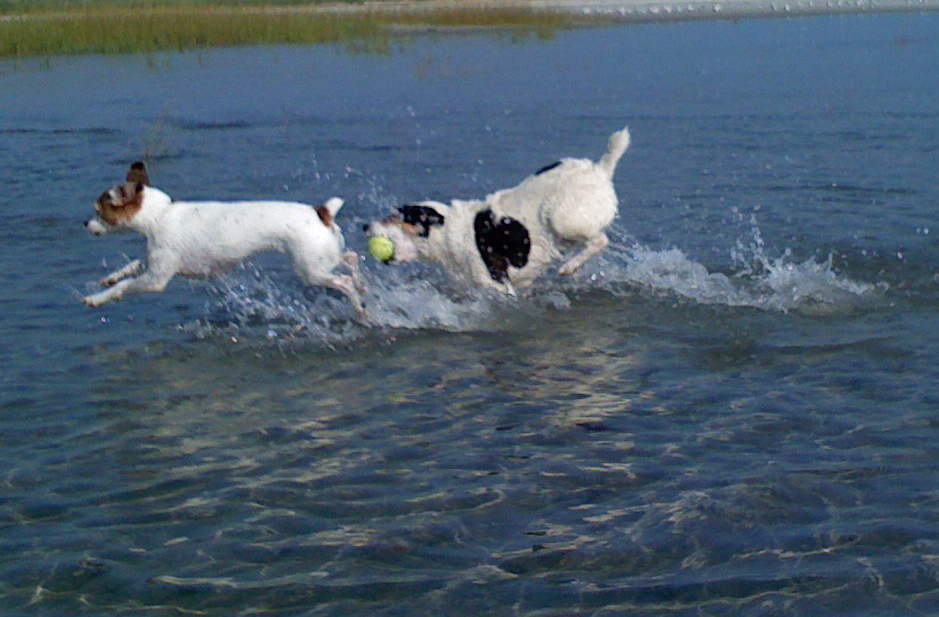 two dogs splashing in the water