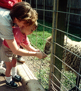 A woman and a child feeding sheep in the petting area at the Central Florida Zoo.
