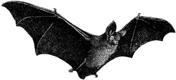 a black bat flying with wings