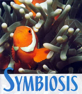 Mutual relationship between Clownfish and Sea Anemones