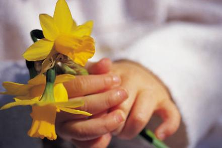 hands holding yellow daffodil