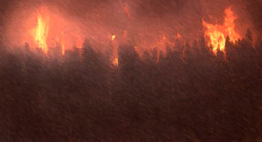 image of burning trees