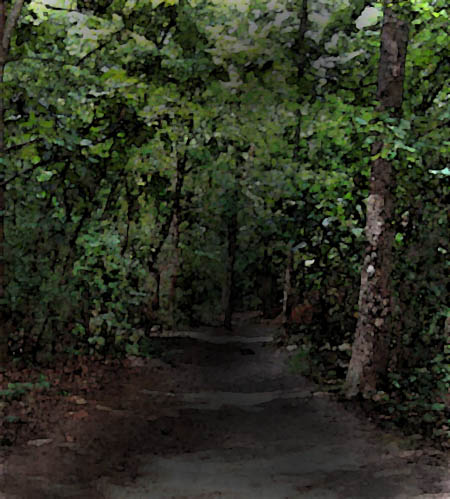 image of a dirt road in the woods at night