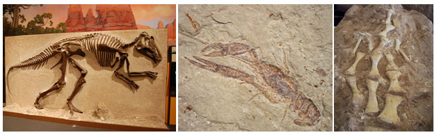 three photographs of dinosaur fossils
