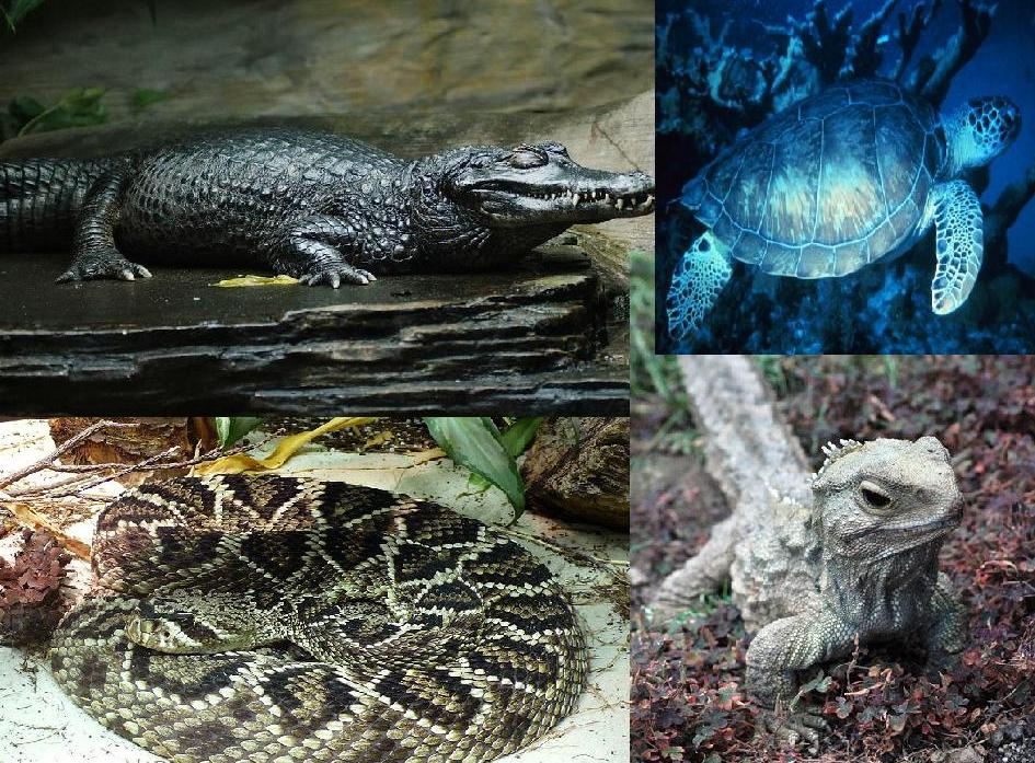 crocodile, turtle, snake and lizard